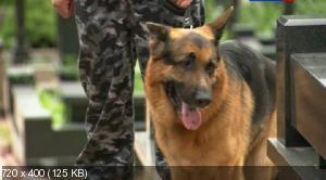 Лорд. Пёс-полицейский (2012-2013) SATRip