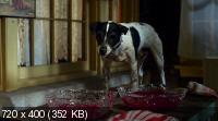 Пес-вампир / Vampire Dog (2012) DVDRip 1400/700 Mb