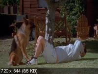 К-911 - Собачья работа 2 / K-911 (1999) DVDRip (x264)